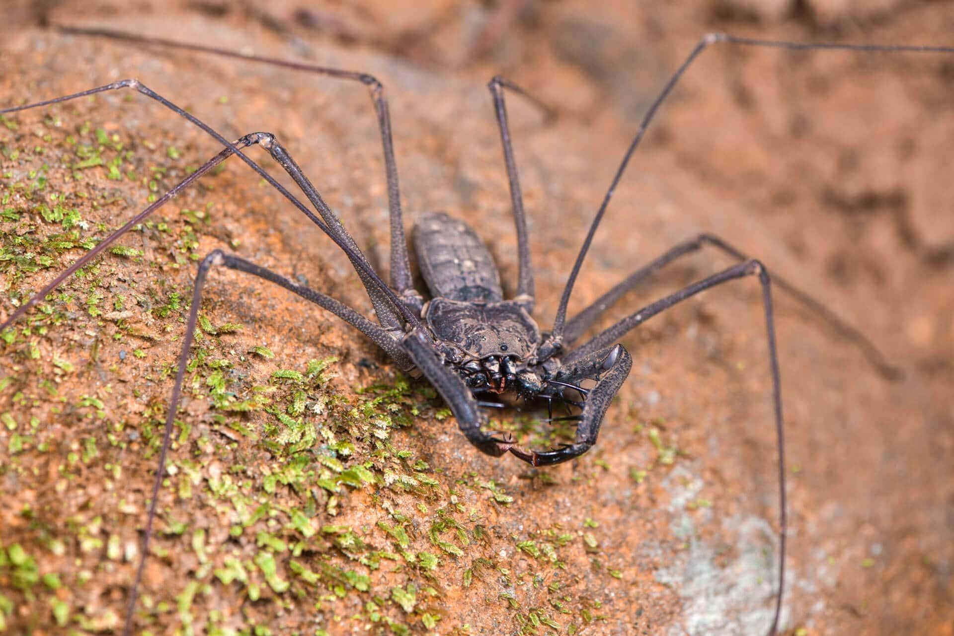 Invertebrates of the jungle: not so creepy crawlies - Crees Manu